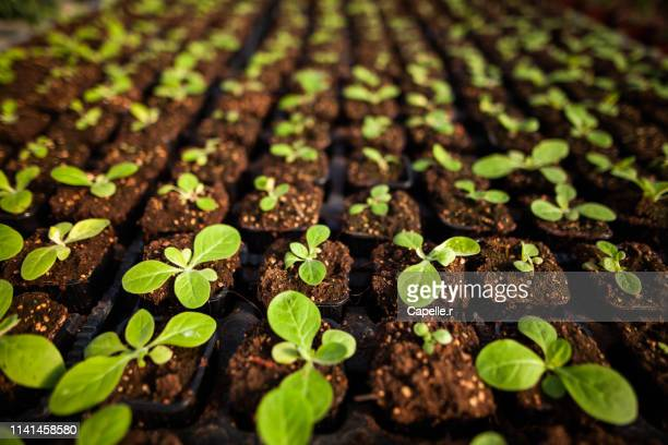 jardinage - croissance verte - cultivated stock pictures, royalty-free photos & images
