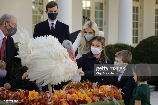 Jared Kushner and Ivanka Trump, both senior advisors to her father U.S. President Donald Trump, and their children pet the national Thanksgiving...