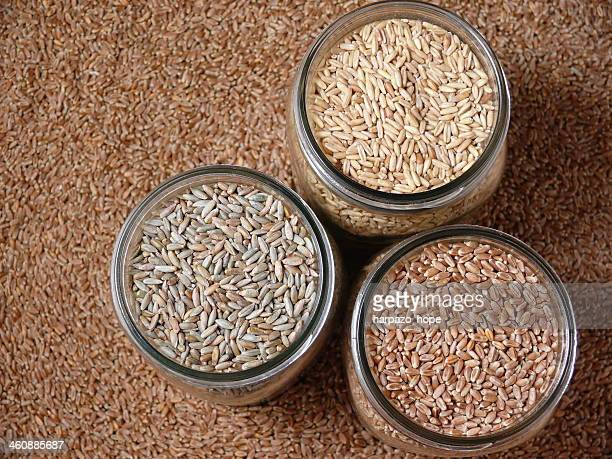 jars of grain - rye grain stock pictures, royalty-free photos & images