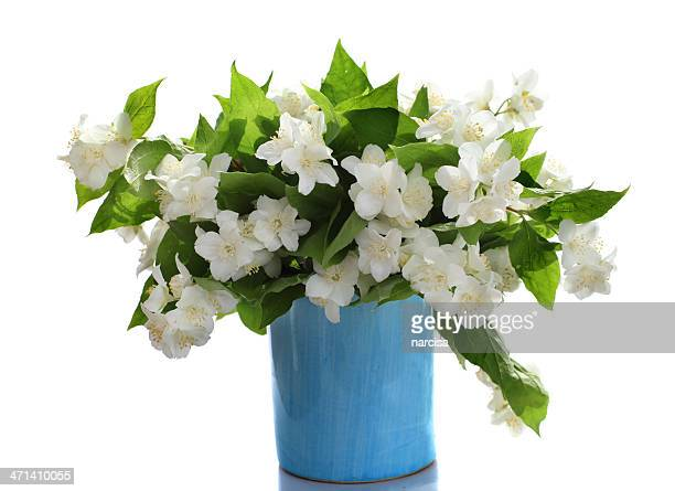 jasmine flowers in small blue vase - jasmine stock photos and pictures
