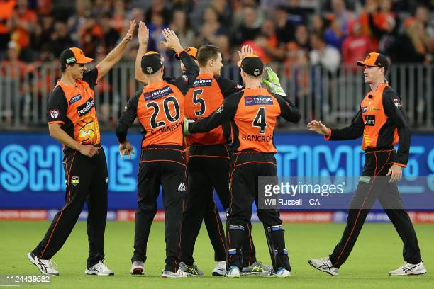 Jason Behrendorff of the Scorchers celebrates after taking the wicket of Shane Watson of the Thunder during the Big Bash League match between the...