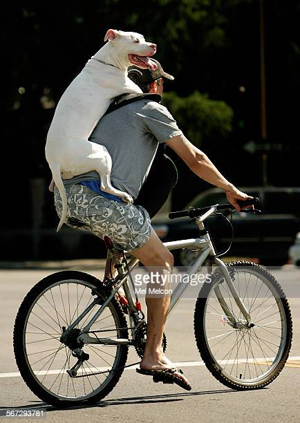 Jason Drew of Studio City gives his dog Casey a 9 year old pit bull a lift while riding his mountain bike along Chandler Ave in Sherman Oaks recently...