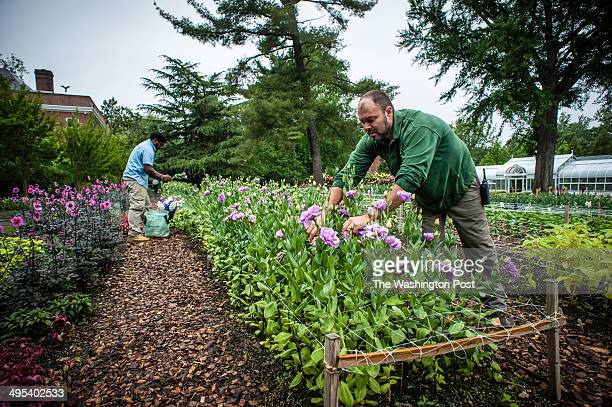Jason Gedeik , head of Greenhouse and Design, works with Joshua Tofor in the Cutting Garden at the estate. Hillwood Estate and Museum Board President...