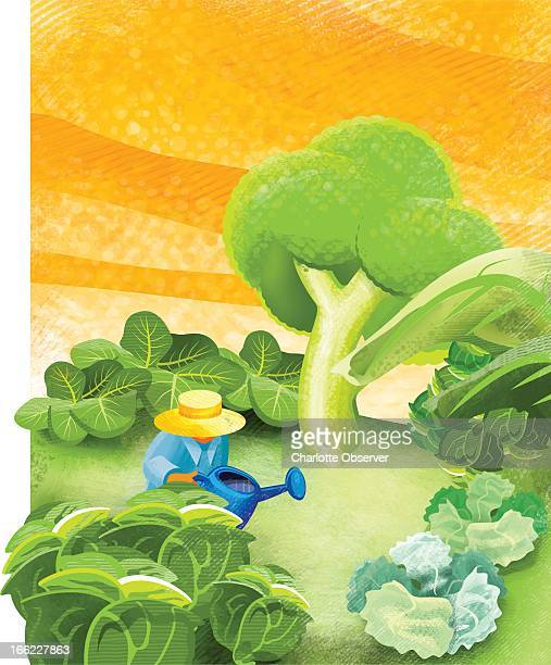 Jason H Whitley color illustration of gardener tending fall vegetable garden of broccoli and cabbages