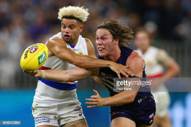 Jason Johannisen of the Bulldogs and Ed Langdon of the Dockers contest for the ball during the round five AFL match between the Fremantle Dockers and...