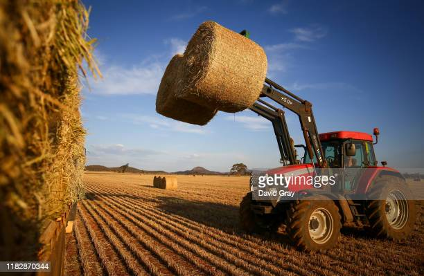 Jason Knapman loads bails of hay onto a truck in a paddock containing a failed wheat crop on the Knapman family property located on the outskirts of...