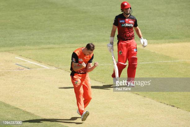 JasonBehrendorffof the Scorchers celebrates the wicket of Beau Webster of the Renegades during the Big Bash League match between the Perth...