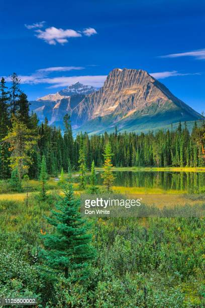 jasper national park in alberta canada - canada stock pictures, royalty-free photos & images