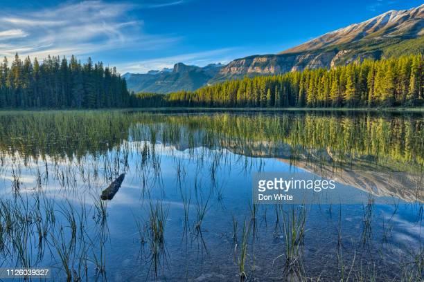 jasper-nationalpark in alberta, kanada - feuchtgebiet stock-fotos und bilder