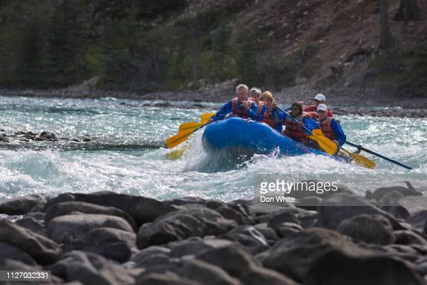 jasper national park i alberta kanada - national team bildbanksfoton och bilder