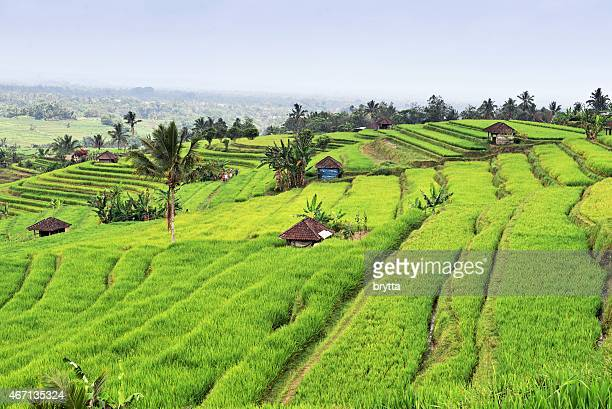jatiluwih rice paddies in the tabanan region of bali,indonesia - tambanan stock pictures, royalty-free photos & images