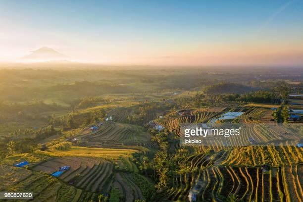 jatiluwih rice terrace at tabanan bali - rice terrace stockfoto's en -beelden