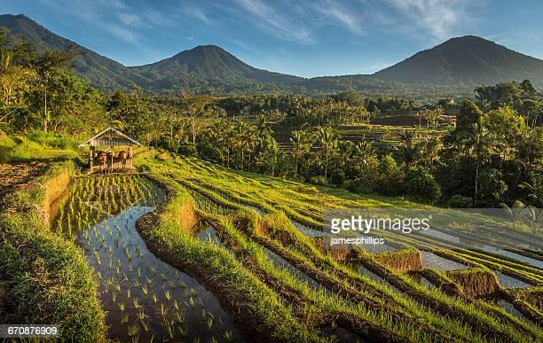 Jatiluwih rice terrace, Bali, Indonesia