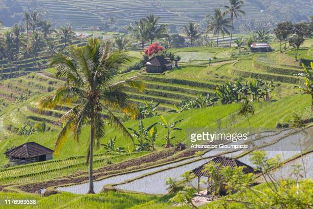 Jatiluwih Rice Terrace in Bali Indonesia on August 15 2019 Jatiluwih is famous for its wellmaintained terraced rice fields and functioning subak...