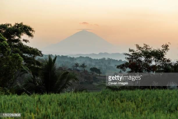 jatiluwih rice terraces, bali, indonesia - denpasar stock pictures, royalty-free photos & images