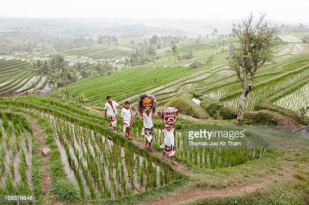 Jatiluwih tourist travel Bali beautiful rice terrace rice paddies field Indonesia travel scene children Ogoh mask green