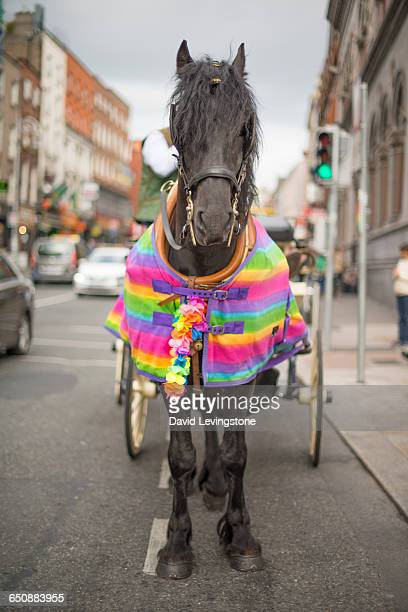 jaunting car with rainbow coat - incidental people stock pictures, royalty-free photos & images