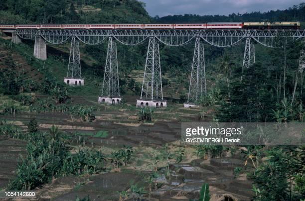 Java Indonésie juin 1985 A la découverte de l'île de Java par le train Siang Express ou train des rizières Ici survolant les rizières en terrasses du...