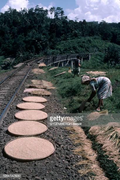 Java Indonésie juin 1985 A la découverte de l'île de Java par le train Siang Express ou 'train des rizières' Ici deux femmes se servent des bas côtés...