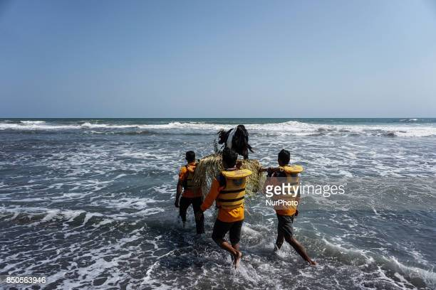 Javanese people brought the offering of goats to be thrown into the sea during the ritual ceremony of labuhan 1st Suro during the Islamic New Year...