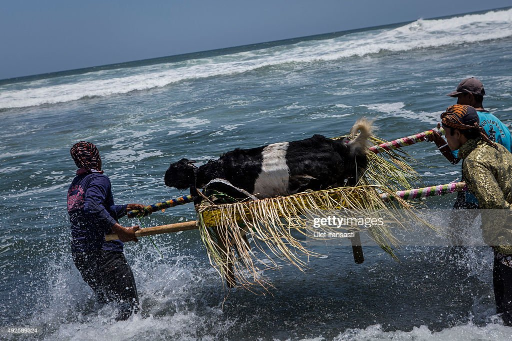 Javanese people carry an offering of goat as they prepare to throwing into the sea during the rituals labuhan '1st Suro' (Javanese calender) during Islamic New Year celebrations at Goa Cemara beach on October 14, 2015 in Yogyakarta, Indonesia. Javanese people celebrates the national holiday with ceremonies and rituals marking the 1437th Islamic New Year's or '1st Suro'. They bring offerings in the form of vegetables, rice, fruits, and livestock that will be thrown into the sea. Local people believe that the rituals will bring them a better life.