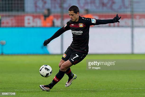 Javier Hernandez Chicharito of Leverkusen in action during the Bundesliga match between Bayer 04 Leverkusen and Hertha BSC at BayArena on January 22...