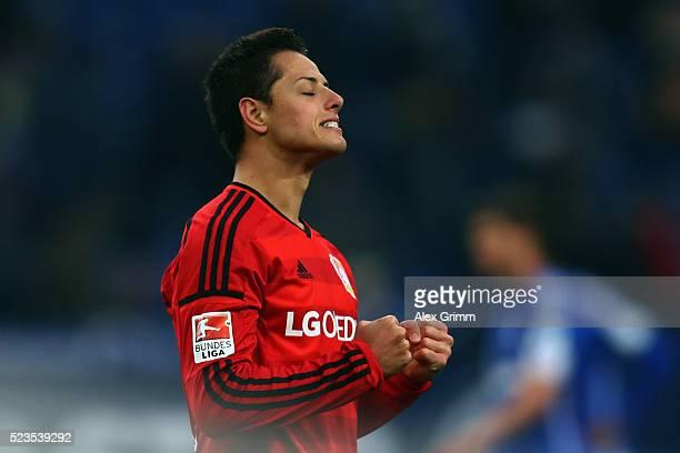 Javier Hernandez of Leverkusen celebrates after the Bundesliga match between FC Schalke 04 and Bayer Leverkusen at VeltinsArena on April 23 2016 in...