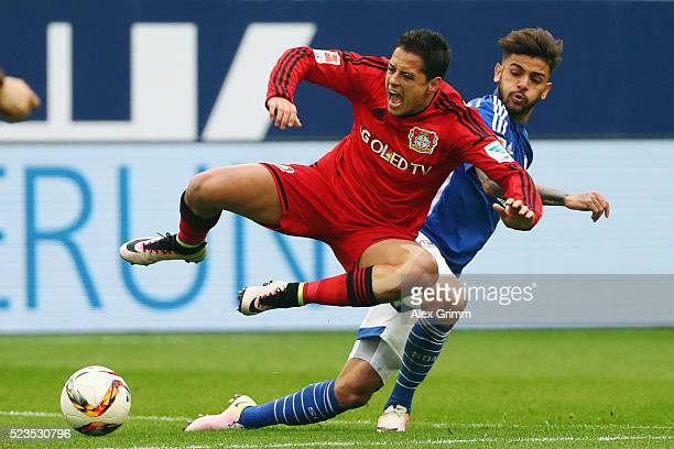 Javier Hernandez of Leverkusen is challenged by Junior Caicara of Schalke during the Bundesliga match between FC Schalke 04 and Bayer Leverkusen at...