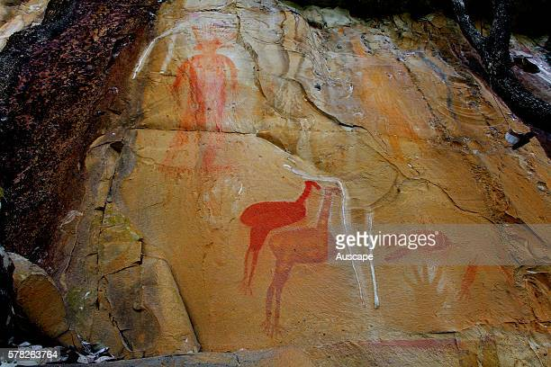Jawoyn Aboriginal rock art at the Amphitheatre on the Jatbula Trail Nitmiluk National Park Katherine Northern Territory Australia