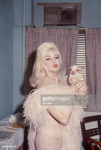 Jayne Mansfield with a chihuahua in the dressing room of the Latin Quarter Night Club circa 1965 New York
