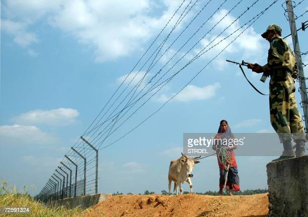 An Indian Border Security Force soldier stands alert as a farmer leads her cow alongside border fencing marking the IndiaBangladesh border in the...