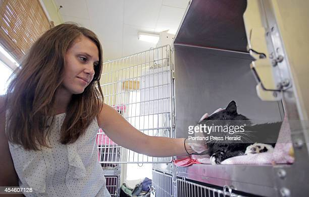 Jeana Roth cares for Clark a cat shot by police who thought he was rabid at the Animal Refuge League in Westbrook Wed September 3 2014 Pellets from a...