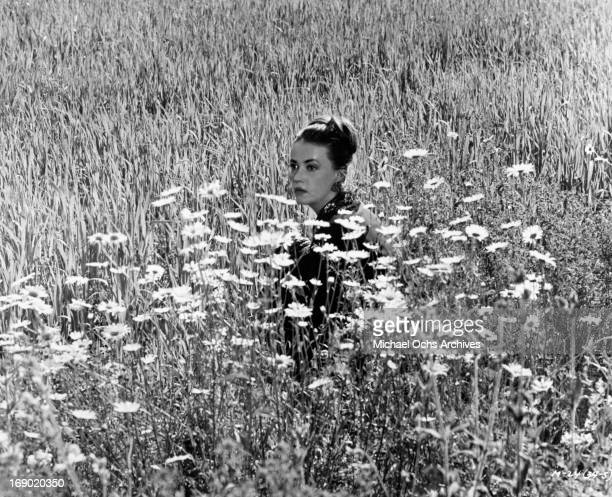 Jeanne Moreau sitting in a field of daisy in a scene from the film 'Mademoiselle' 1966