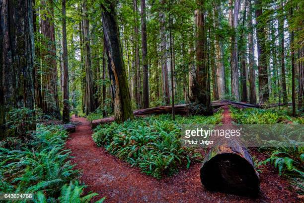 Jedediah Smith Redwoods State Park,California,usa