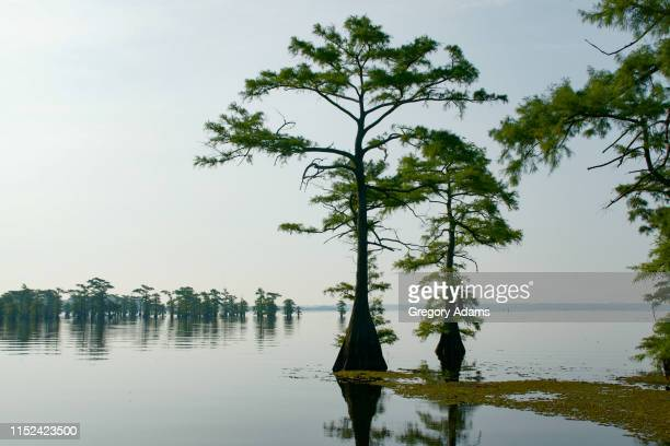 jeems bayou in eastern texas texas - spanish moss stock pictures, royalty-free photos & images
