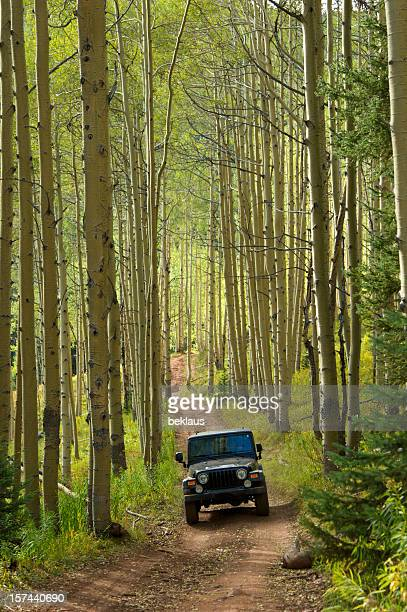 jeep in the aspens - 4x4 stock pictures, royalty-free photos & images