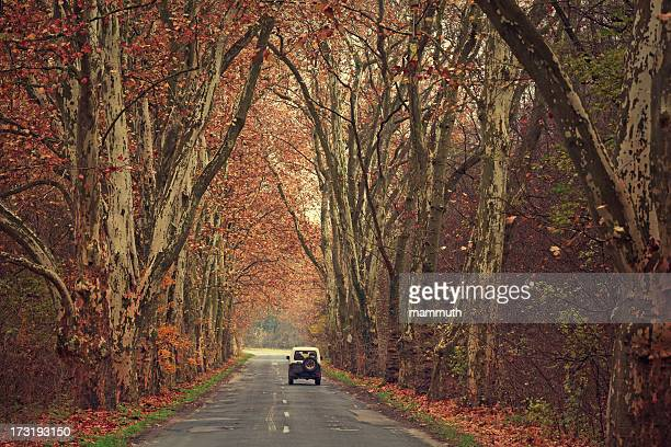 jeep on treelined highway - avenue stock pictures, royalty-free photos & images