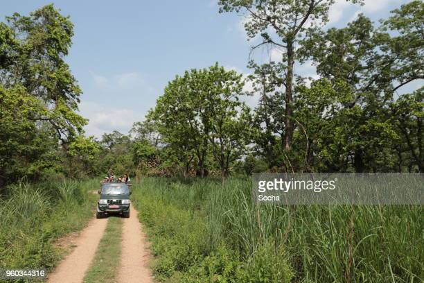 jeep safari in chitwan national park, nepal - chitwan stock pictures, royalty-free photos & images