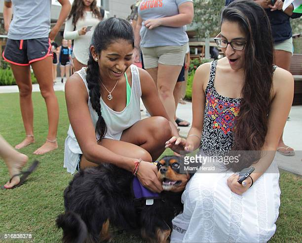 Jeevana Pakanati left and Shaj Khara pet one of the therapy dogs visiting the Nova Southeastern University campus in Davie Fla