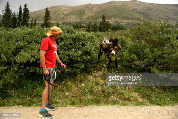 Jeff Bennet of Dallas Texas tries to coax his donkey Willy out of the bushes as the duo come off of Mosquito Pass as they take part in the 70th...
