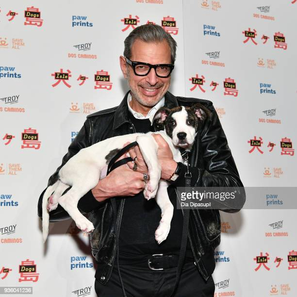 Jeff Goldblum attends the 'Isle of Dogs' special screening at IFC Center on March 21 2018 in New York City