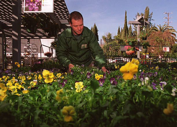 Jeff Lieberman Cq Manager Of The Armstrong Garden Centers In Sherman Oaks