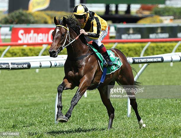 Jeff Lloyd rides Salerno during Sydney Racing at Royal Randwick Racecourse on October 18 2014 in Sydney Australia