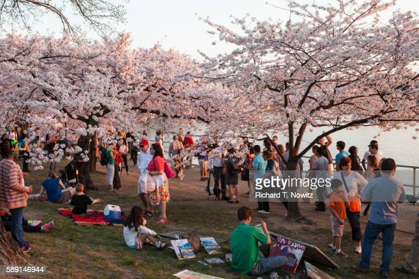Jefferson Memorial & Tidal Basin with Cherry Blossoms