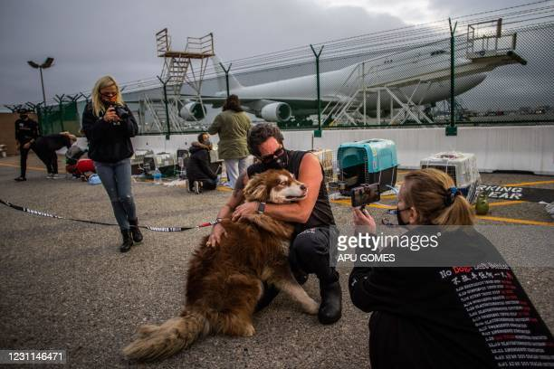 """Jeffery Beri, the founder of """"No Dogs Left Behind"""" hugs a dog while activists and volunteers transport a group of 29 rescued dogs after they arrived..."""