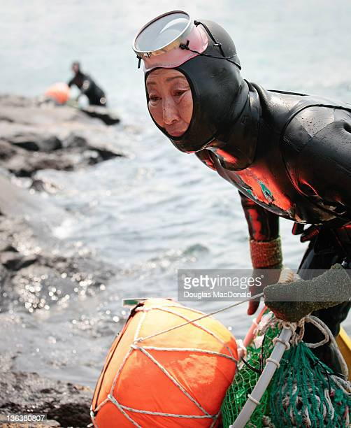 A Jeju diving woman drags her catch out of the water at the 5th annual Haenyeo Diving Festival on Jeju Island South Korea