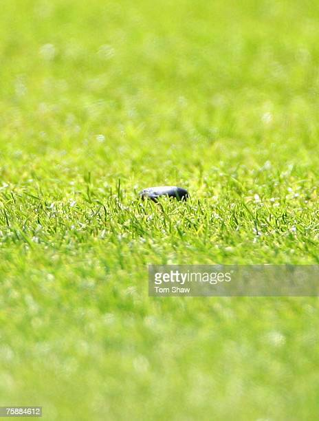 Jelly Bean is pictured on the outfield during day five of the Second Test match between England and India at Trent Bridge on July 31, 2007 in...