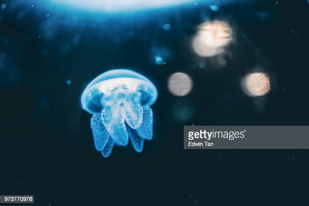 jelly fish in the water - deep stock pictures, royalty-free photos & images