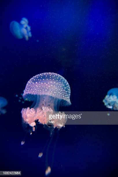 jellyfish float in the water - fonds marins photos et images de collection