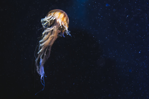 Jellyfish in deep space 907174130